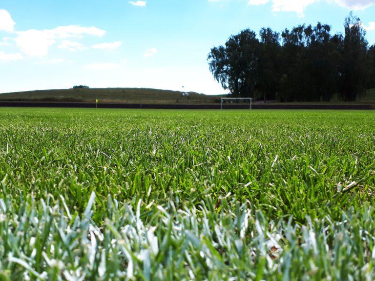 Der grüne Teppich im Uwe-Seeler-Fußball-Park